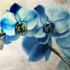 004 orquidea azul fernando garcia herrera