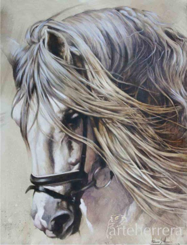 032 estudio caballo fernando garcia herrera