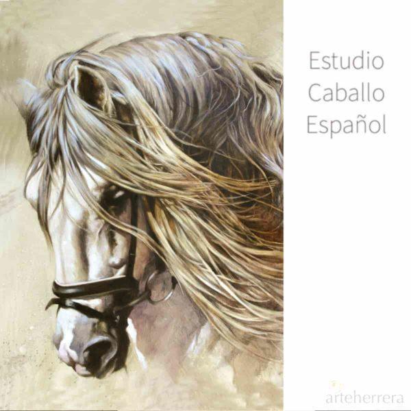 estudio caballo espanol herrera horse