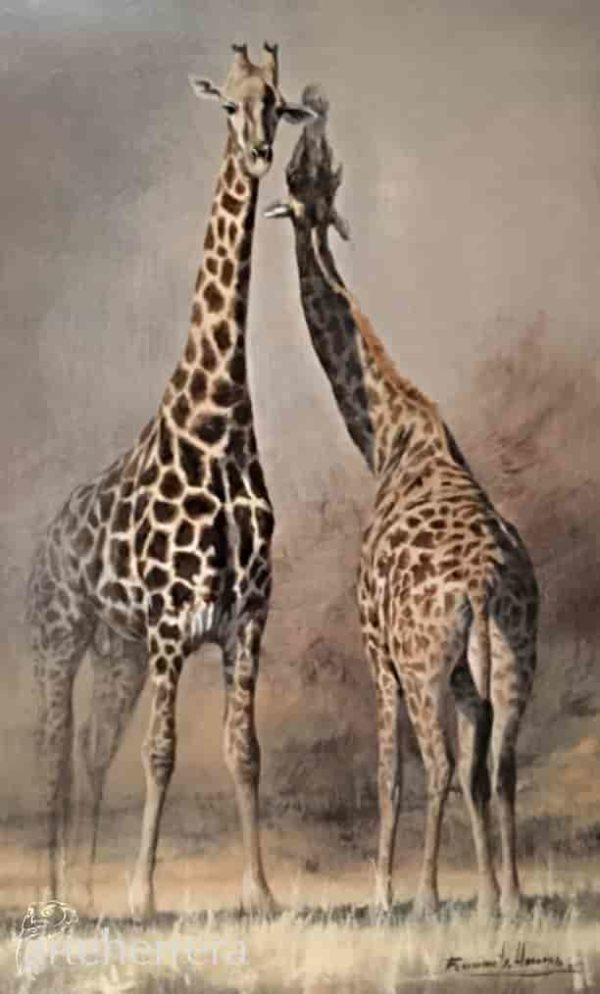 jirafas africa herrera