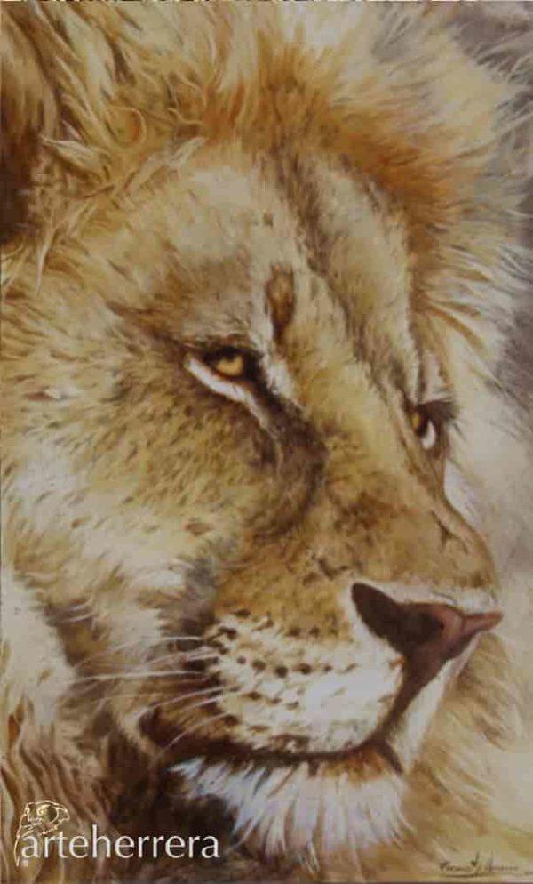 leon africa wildlife herrera
