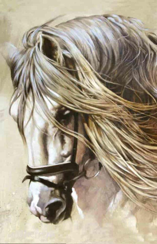 estudio.caballo espanol herrera lamina