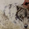 foto lobo2
