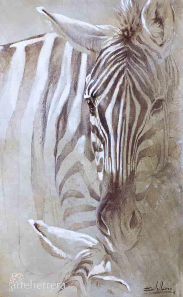 lamina estudio cebras africa herrera