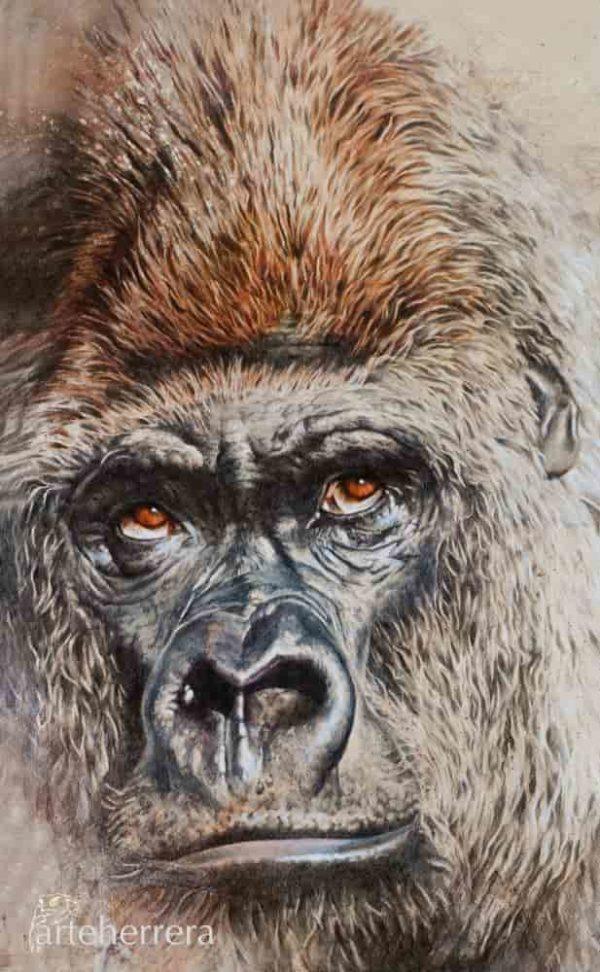 lamina gorila africa herrera