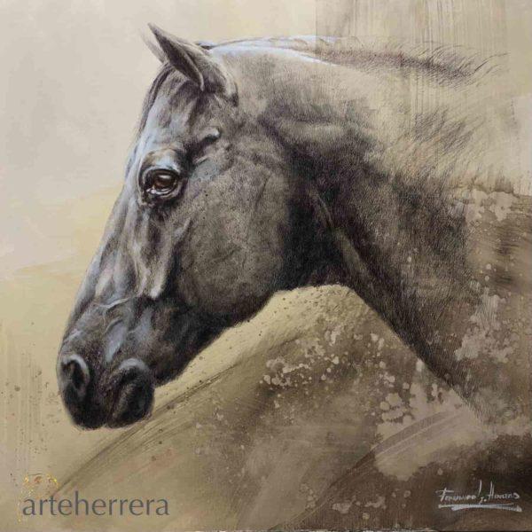 huapango caballo mexico herrera