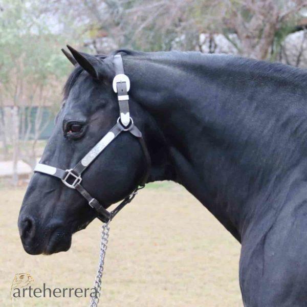 huapango caballo mexico rancho espiga