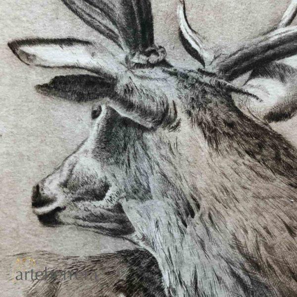 venado caza detalle arteherrera ciervo carpeta grabado
