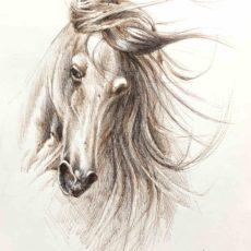 Boceto caballo español