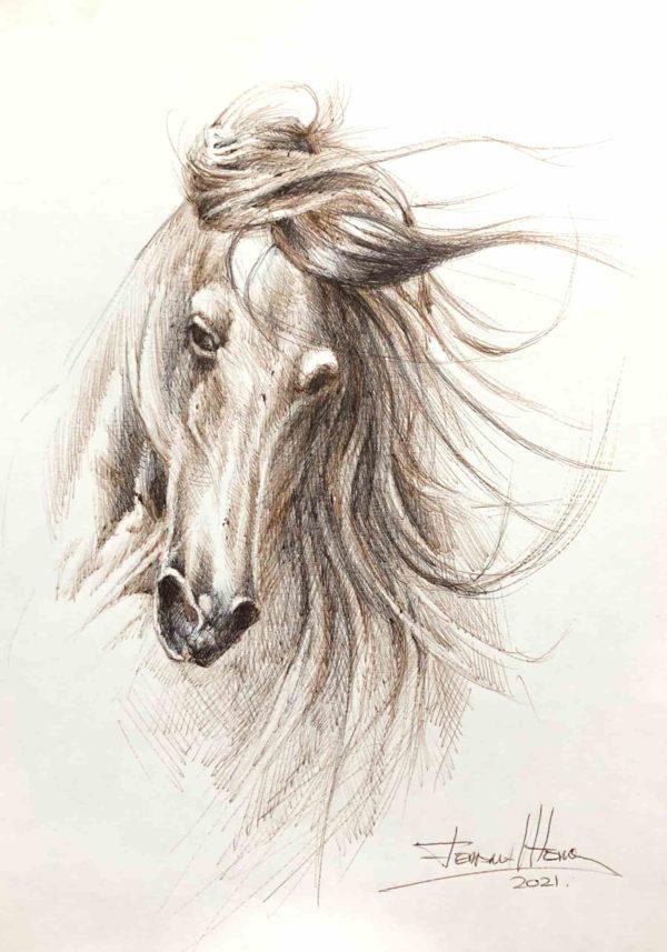 boceto dibujo caballo herrera arteherrera