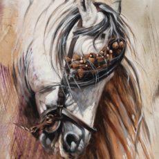 Horse Sorrel