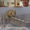 tigre herrera autor cuadro wildlife